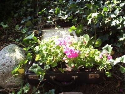 Suitcase-Planter-