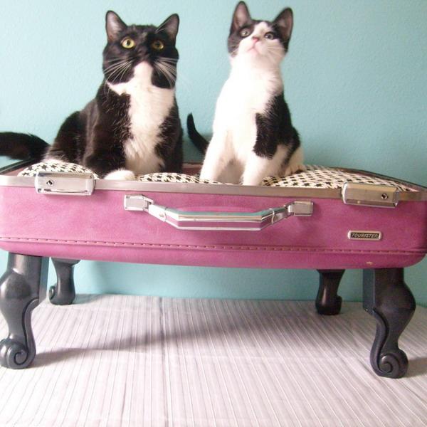 Krevet za mačke